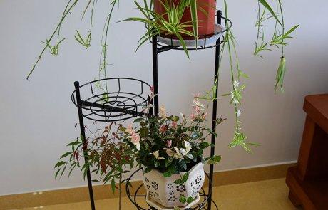pangaea folding flower rack05