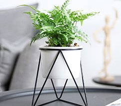 indoor-plant-stands-cheap1