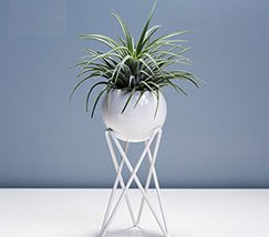 JFR-020 Stands Flower Arrangement /Small Plant1