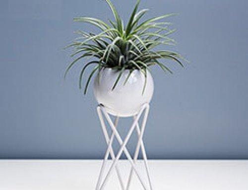 JFR-020 Stands Flower Arrangement /Small Plant