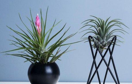 JFR-020 Stands Flower Arrangement /Small Plant03